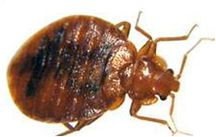 bed bugs <em>control</em> Vancouver